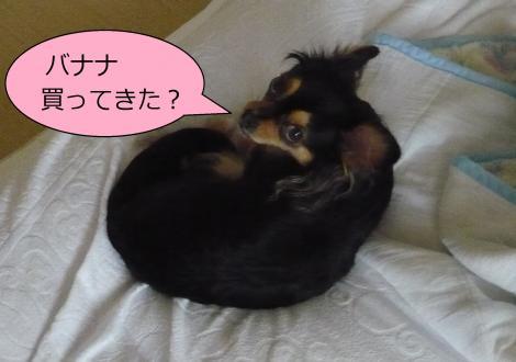 縺ー縺ェ縺ェ6_convert_20120806153606