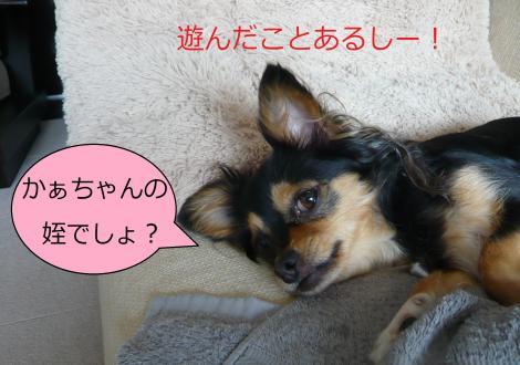 繧ゅb・胆convert_20120815223432
