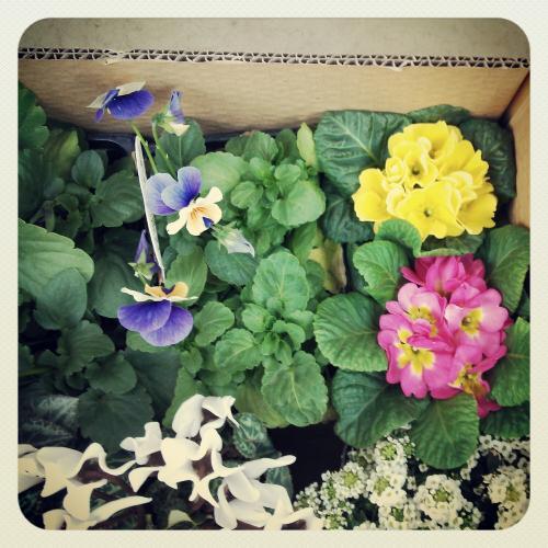春の花たち1S