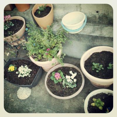 春の花たち 2S