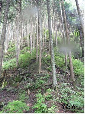 林道を目指します