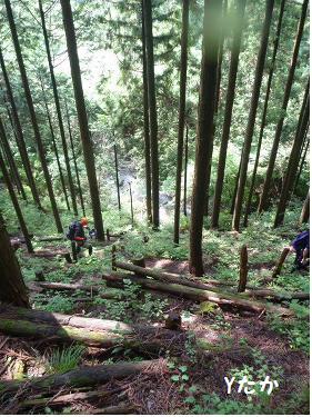 林道に出ました