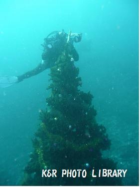 クリスマスツリーとGUNZO