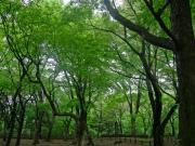 20120428INOGASHIRA.jpg