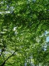 20120513green.jpg