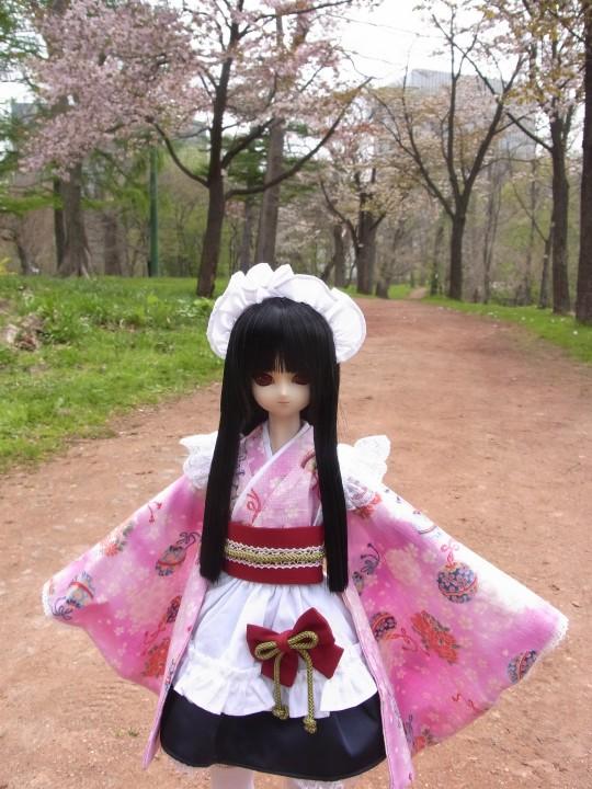植物園 桜01