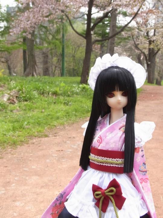 植物園 桜02