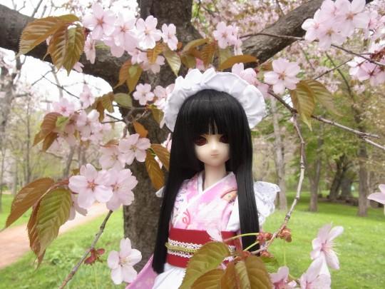 植物園 桜03