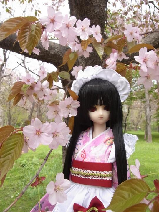 植物園 桜04