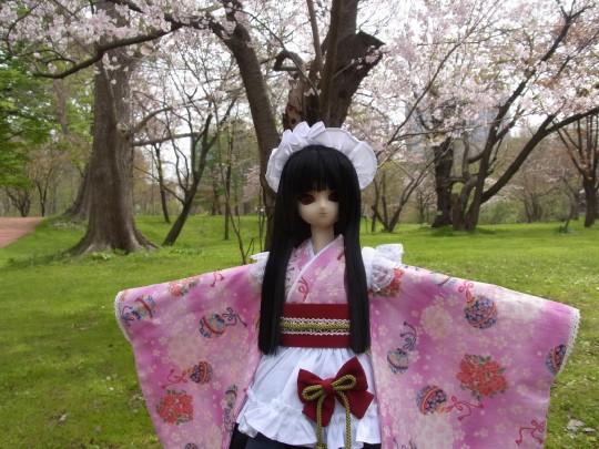 植物園 桜05