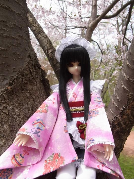 植物園 桜06