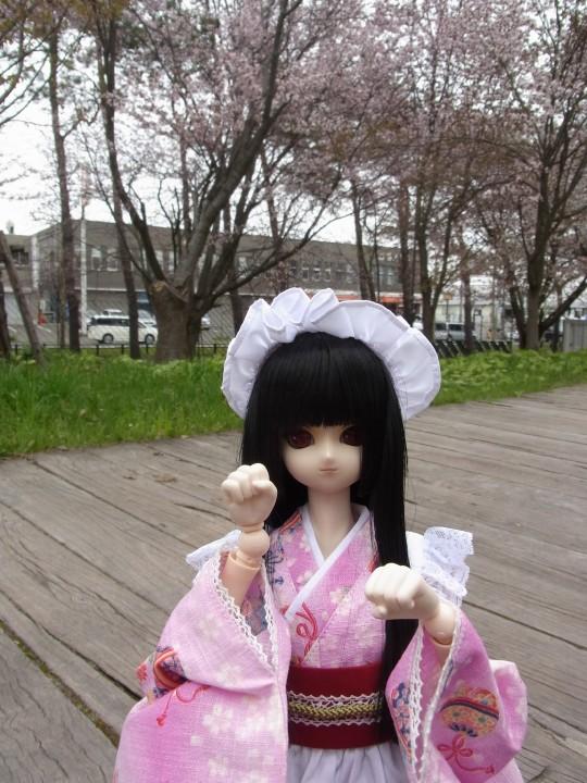 札幌ドーム 桜05