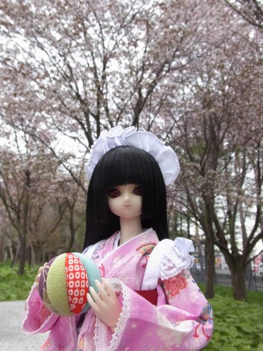 札幌ドーム 桜03