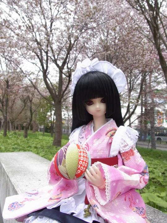 札幌ドーム 桜04