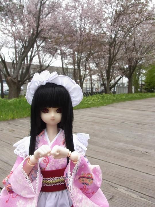 札幌ドーム 桜06