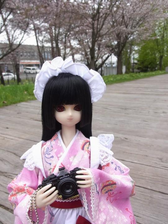 札幌ドーム 桜07