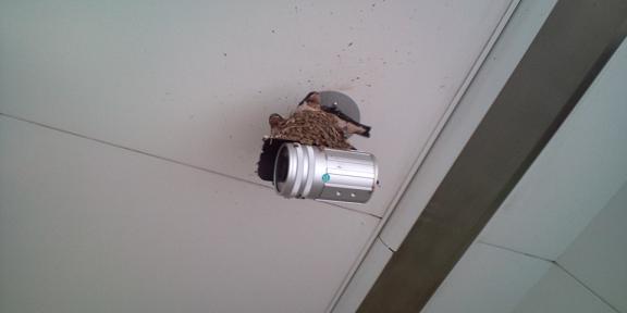 防犯カメラの上にツバメの巣