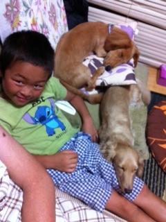 2012_DOGS.jpg