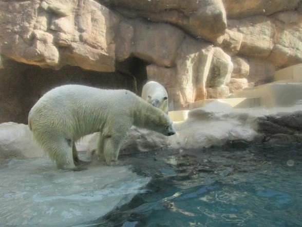 25.1.6家族で動物園へ 076_ks