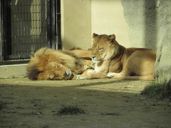 25.1.6家族で動物園へ 118_ks
