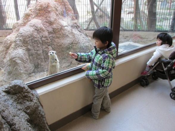 25.1.6家族で動物園へ 126_ks