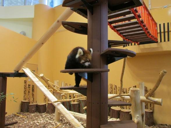25.1.6家族で動物園へ 035_ks