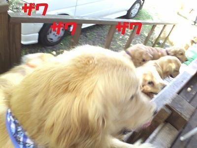 CA6IJRXD_20120605155526.jpg