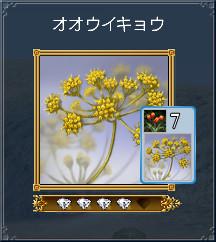04_オオウイキョウ