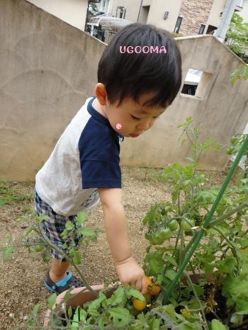 01DSC08623_convert_20120704235054.jpg