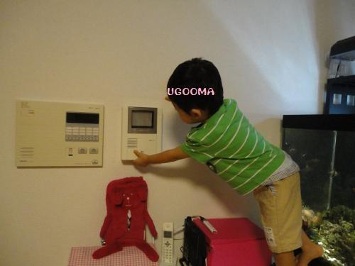 DSC00139_convert_20121020111322.jpg