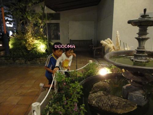 DSC00352_convert_20121103162421.jpg