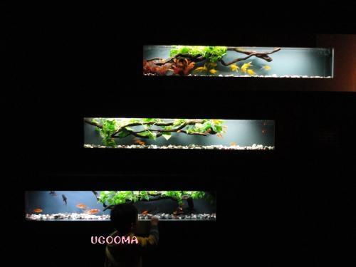 DSC01477_convert_20130104020521.jpg