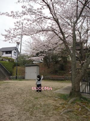 DSC08951_convert_20120502162406.jpg