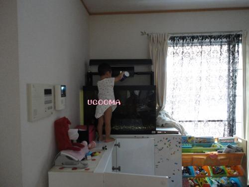 DSC09428_convert_20120809151610.jpg