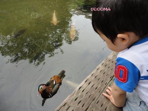 DSC09553_convert_20120530153816.jpg
