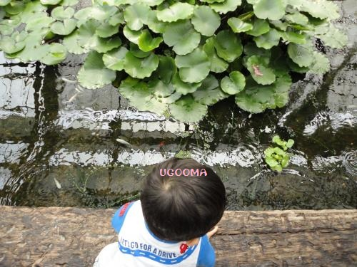 DSC09637_convert_20120531190144.jpg