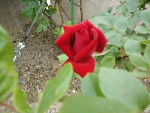DSC09856_convert_20120606025023.jpg