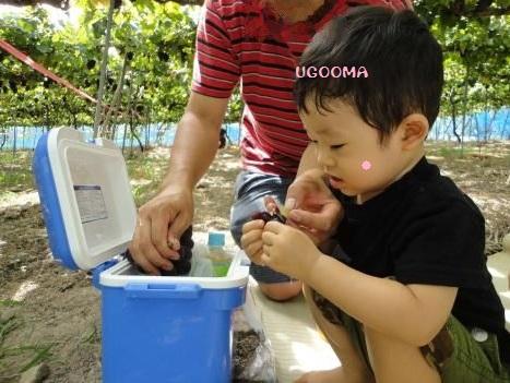 DSC09907_convert_20120920121651.jpg