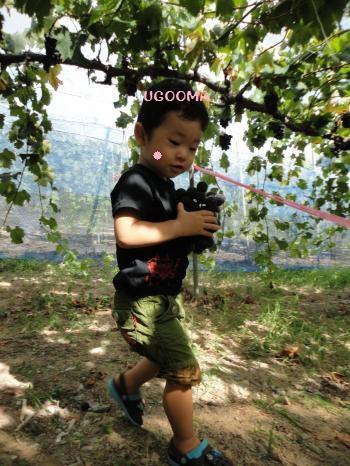 DSC09915_convert_20120920121708.jpg