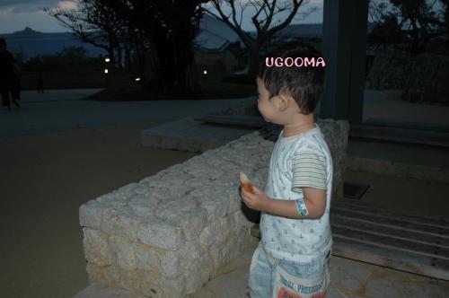 DSC_0690_convert_20121116140312.jpg