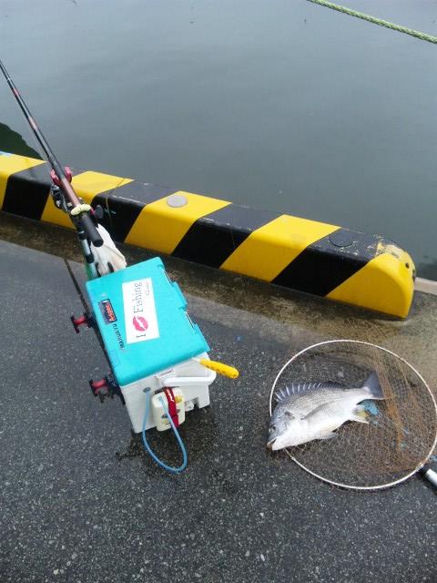 釣り座とキビレ