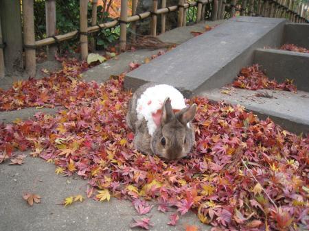 秋の香り?食べてもいいの?