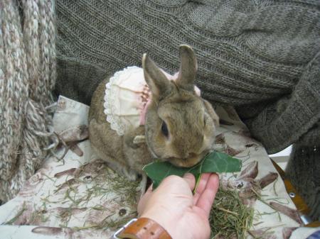 ブロッコリーの葉っぱ、美味しいね!