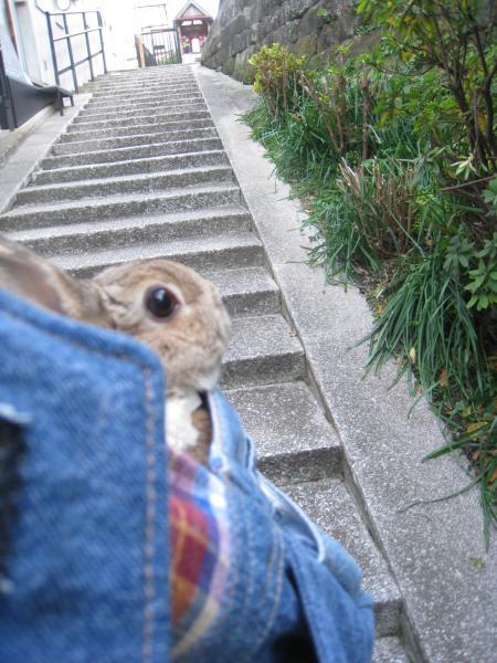 いつもの階段でしょ?