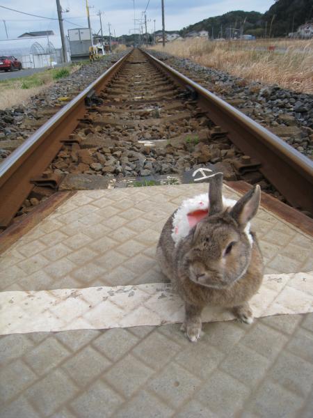 電車来ないよね?