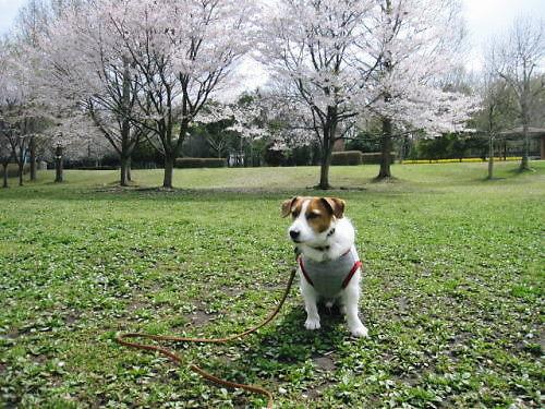 2012長岡公園282