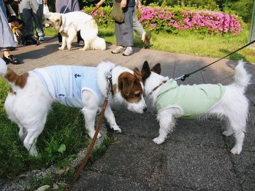 2012長岡公園364