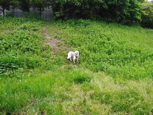 2012長岡公園415