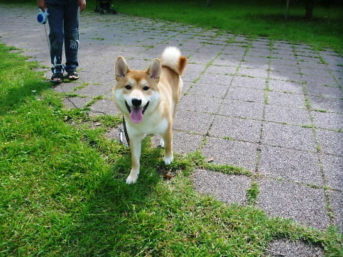 2012長岡公園456