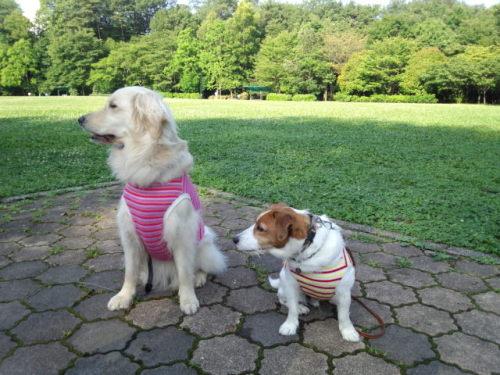 2012長岡公園497
